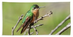 Atlantic Rainforest Hummingbird Beach Towel