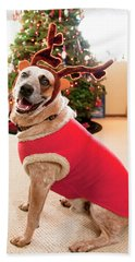 Auggie The Dog With Reindeer Outfit Beach Towel
