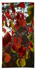 Autumn Dogwood In Evening Light Beach Sheet