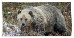 Beach Sheet featuring the photograph Autumn Grizzly by Jack Bell