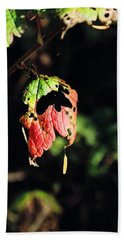 Beach Towel featuring the photograph Autumn Leaf by Cathy Mahnke
