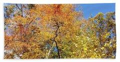 Beach Towel featuring the photograph Autumn Limbs by Jason Williamson