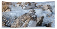 Autumn Plumage White-tailed Ptarmigan Beach Sheet