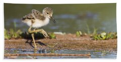 Baby Black-necked Stilt Exploring Beach Towel by Bryan Keil