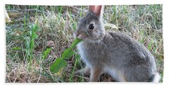 Baby Bunny Eating Dandelion #01 Beach Sheet by Ausra Huntington nee Paulauskaite