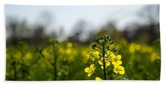 Backlit Canola Flower Beach Towel