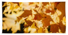 Backlit Fall Maple Leaves Beach Towel