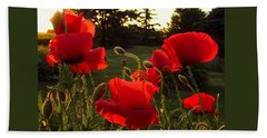 Backlit Red Poppies Beach Towel