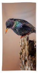 Backyard Birds European Starling Beach Towel by Bill Wakeley
