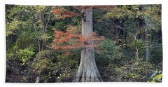 Bald Cypress In White River Nrw Arkansas Beach Towel