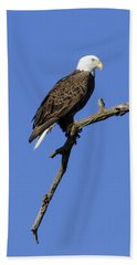Bald Eagle 4 Beach Sheet