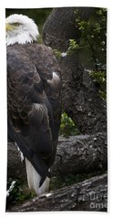 Bald Eagle Beach Towel by David Millenheft