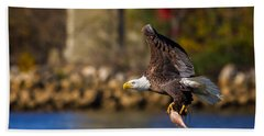 Bald Eagle In Flight Over Water Carrying A Fish Beach Towel