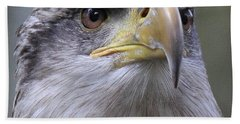Bald Eagle - Juvenile Beach Towel