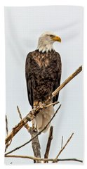 Bald Eagle On A Branch Beach Towel