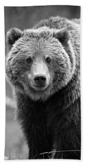 Banff Grizzly In Black And White Beach Towel