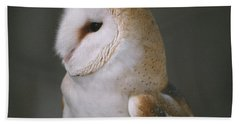 Barn Owl Beach Towel by David Porteus