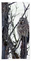 Barred Owl 2 Beach Towel by Steven Clipperton