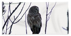 Barred Owl 3  Beach Sheet by Steven Clipperton