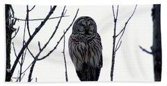 Barred Owl 4 Beach Towel by Steven Clipperton