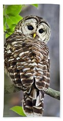 Beach Towel featuring the photograph Barred Owl by Christina Rollo