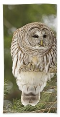 Barred Owl Hunting Beach Sheet