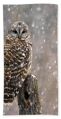 Barred Owl In A New England Snow Storm Beach Towel