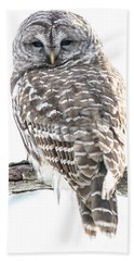 Barred Owl2 Beach Towel