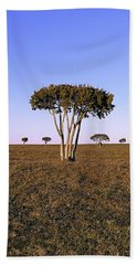 Barren Tree Beach Towel