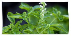 Beach Towel featuring the photograph Basil With White Flowers Ready For Culinary Use by David Millenheft