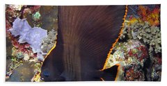 Beach Towel featuring the photograph Bat Fish by Sergey Lukashin