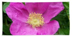 Pink Beach Rose Fully In Bloom Beach Towel
