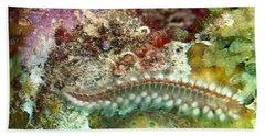 Bearded Fireworm On Rainbow Coral Beach Towel by Amy McDaniel