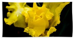 Bearded Iris Morning Dew Beach Sheet by Mary Ward
