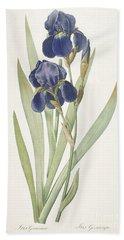 Bearded Iris Beach Towel by Pierre Joseph Redoute