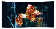 Beach Sheet featuring the photograph Gorgeous Tulip by Phyllis Kaltenbach