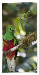 Beautiful Quetzal 1 Beach Towel