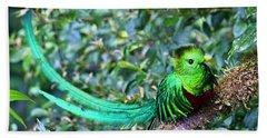 Beach Towel featuring the photograph Beautiful Quetzal 3 by Heiko Koehrer-Wagner