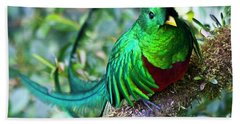 Beach Towel featuring the photograph Beautiful Quetzal 4 by Heiko Koehrer-Wagner