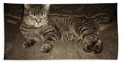 Beach Towel featuring the photograph Beautiful Tabby Cat by Absinthe Art By Michelle LeAnn Scott
