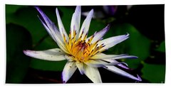 Beautiful Violet White And Yellow Water Lily Flower Beach Towel