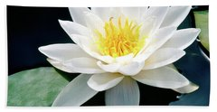Beautiful Water Lily Capture Beach Sheet