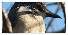 Beautiful Western Scrub Jay Beach Sheet