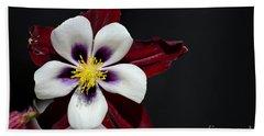 Beautiful White Petal Yellow Stamen Purple Shades Aquilegia Columbine Flower Beach Towel