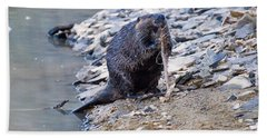 Beaver Sharpens Stick Beach Towel by Chris Flees
