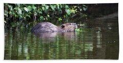beaver swims in NC lake Beach Towel