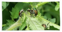 Beach Towel featuring the photograph Beetle Posse by Thomas Woolworth