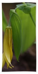 Beach Towel featuring the photograph Bellwort Or Uvularia Grandiflora by Daniel Reed