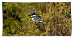 Belted Kingfisher Female Beach Towel by Anthony Mercieca
