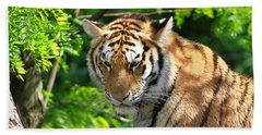 Bengal Tiger Portrait Beach Towel by Dan Sproul